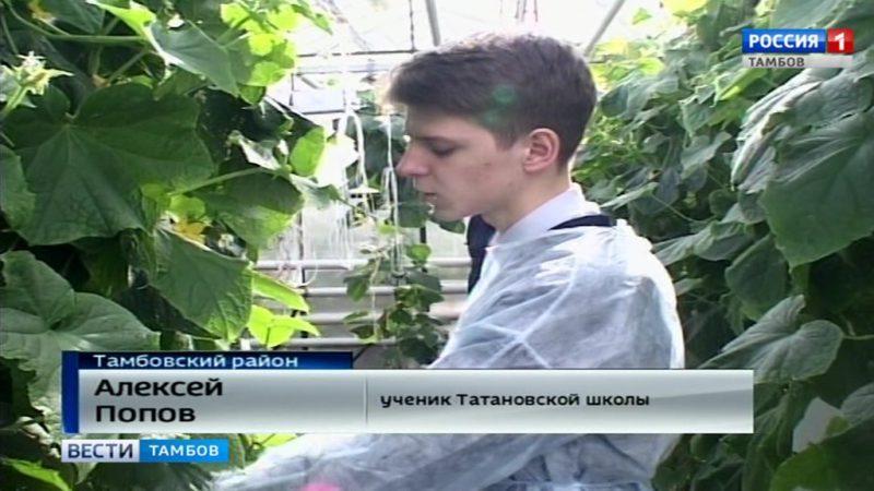 Положительный парниковый эффект: школьники из Татанова огурцами обеспечены